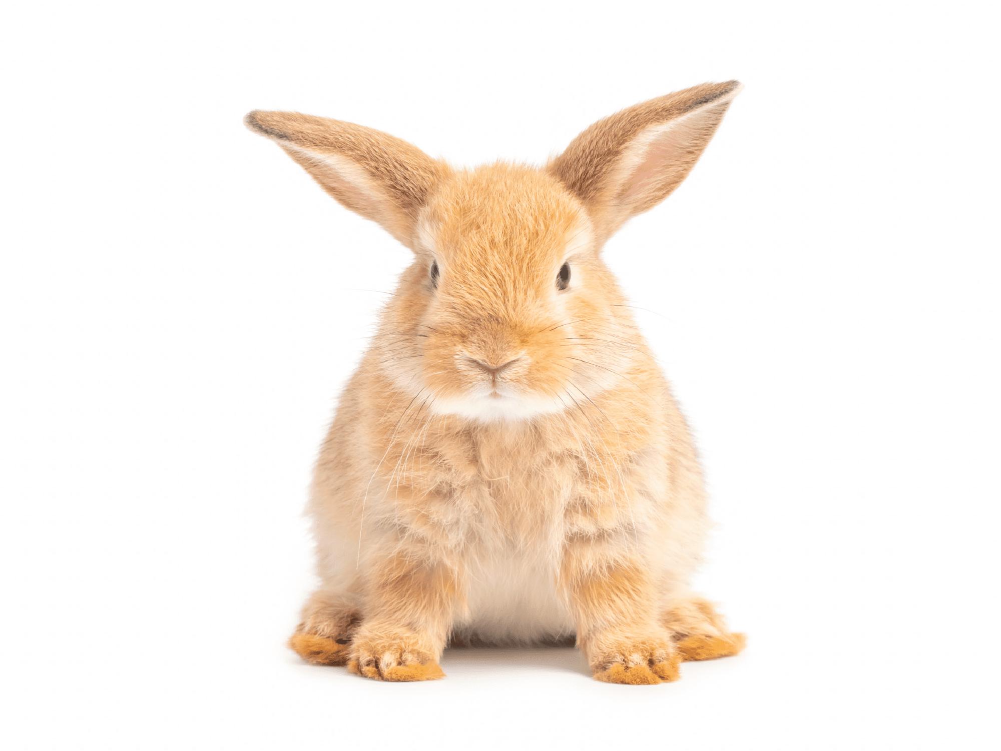 Bunny@2x